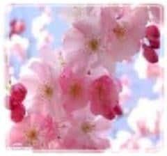 Feng shui spray - Glädje
